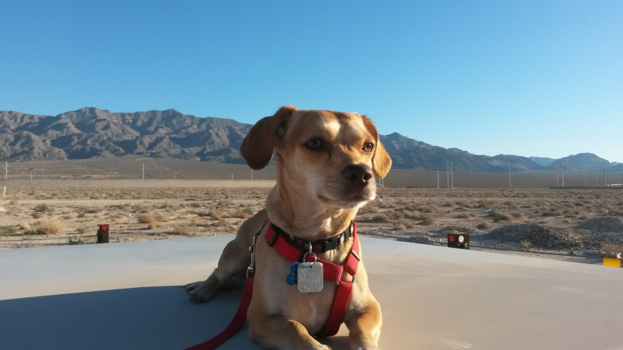 Aggressive Dog Training Las Vegas